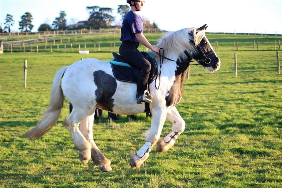 joli cheval au galop dans un champ situé aux portes de Toulouse