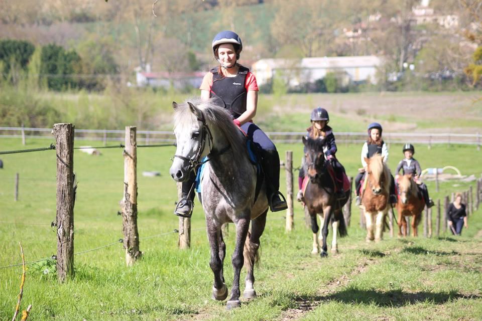 Jolis poneys au poney club d'ALERT situé aux portes de Toulouse